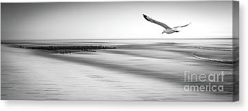 Canvas Print featuring the photograph Desire Light Bw by Hannes Cmarits