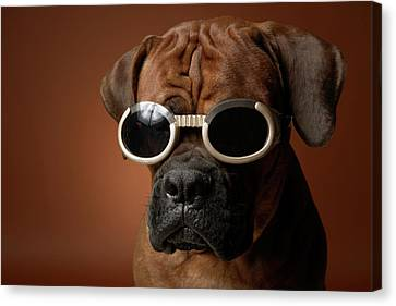 Dog Wearing Sunglasses Canvas Print by Chris Amaral