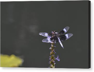Dragon Fly Canvas Print by Linda Geiger