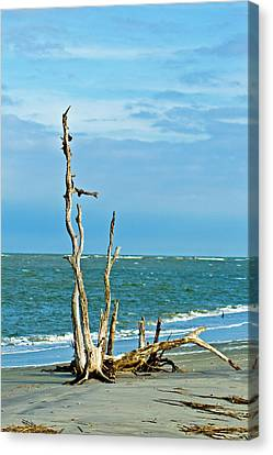 Driftwood On Beach Canvas Print by Bill Barber