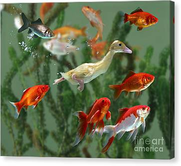 Duckling And Goldfish Canvas Print by Jane Burton