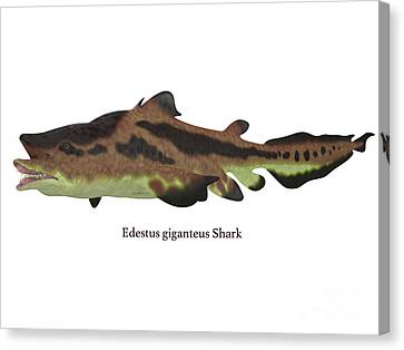 Edestus Shark Canvas Print