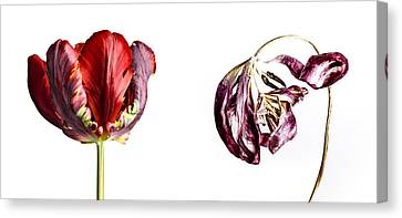 Aging Canvas Print - Fading Beauty by Nailia Schwarz
