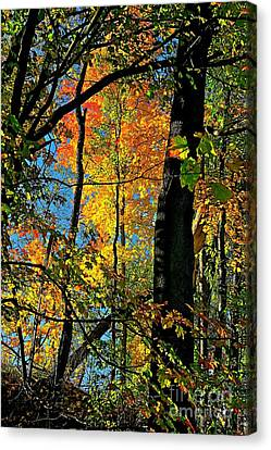 Fall Fire Works Canvas Print by Robert Pearson