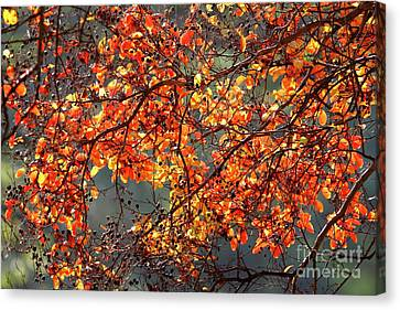 Canvas Print featuring the photograph Fall Leaves by Nicholas Burningham