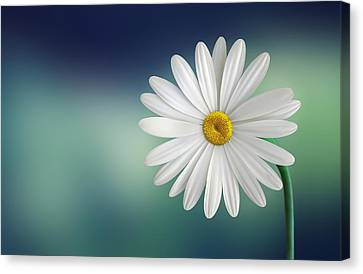 Flower Canvas Print by Bess Hamiti