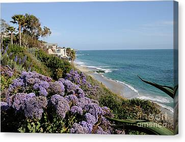 Flowers At The Beach Canvas Print by Timothy OLeary