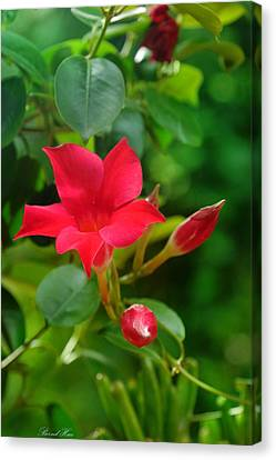Canvas Print featuring the photograph Flowers by Bernd Hau