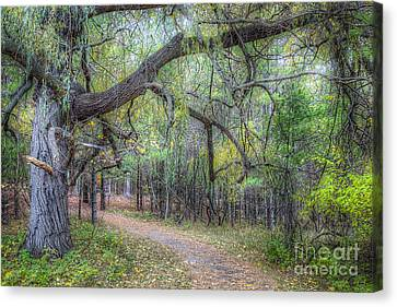 National Lakeshore Canvas Print - Forest In Sleeping Bear Dunes by Twenty Two North Photography