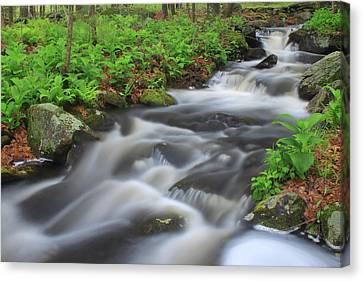 Forest Stream In Spring Canvas Print by John Burk