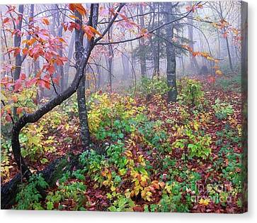 Forks Of Cranberry Trail Canvas Print by Thomas R Fletcher