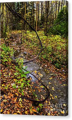 Gauley River Headwaters Canvas Print