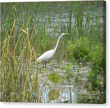Great Egret Watching And Waiting Canvas Print by Ruth Housley