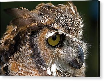 Canvas Print featuring the photograph Great Horned Owl by JT Lewis