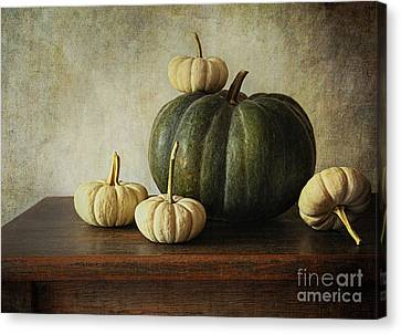 Green Pumpkin And Gourds On Table  Canvas Print