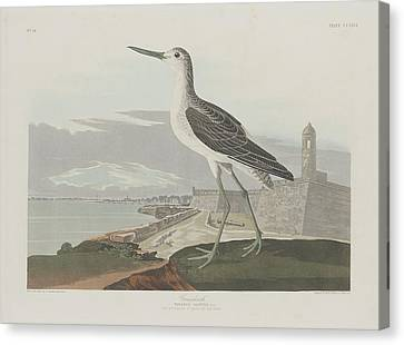 Seagull Canvas Print - Greenshank by Dreyer Wildlife Print Collections