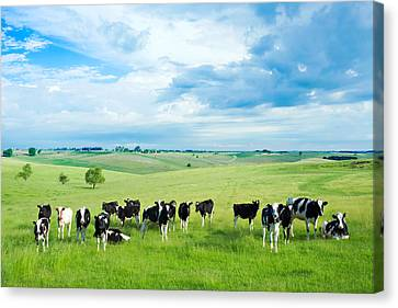 Farm Animal Canvas Print - Happy Cows by Todd Klassy