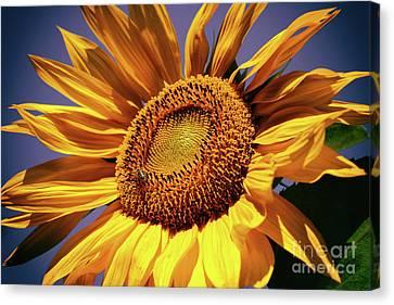 Canvas Print - Happy Sunflower by Mariola Bitner