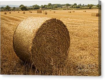 Chris Evans Canvas Print - Hay Bales  by Chris Evans