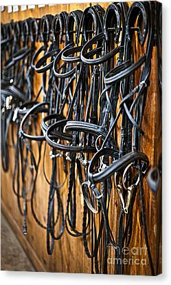 Horse Bridles Hanging In Stable Canvas Print