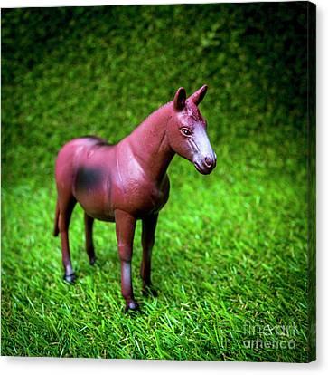 Toy Animals Canvas Print - Horse Figurine by Bernard Jaubert