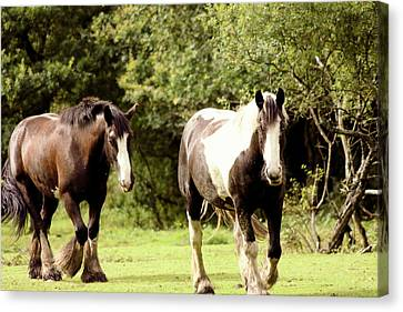 Bonding Canvas Print - Horses by Frances Lewis
