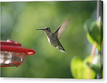 Hummer Canvas Print by Heidi Poulin