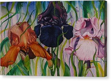 I Thought Tulips Canvas Print by Shahid Muqaddim