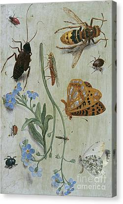Nature Study Canvas Print - Insects  by Jan Van Kessel