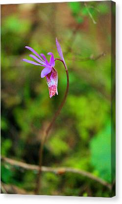 Jack In The Pulpit Canvas Print by Jeff Swan