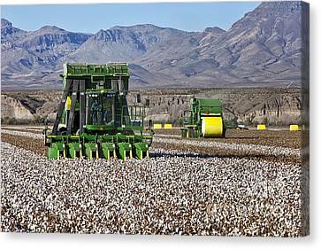 Farm System Canvas Print - John Deere Cotton Pickers Harvesting by Inga Spence