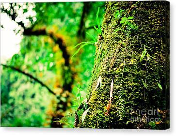 Maple Season Canvas Print - Jungle Annapurna Yatra Himalayas Mountain Nepal by Raimond Klavins