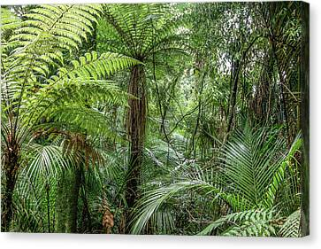 Canvas Print featuring the photograph Jungle Ferns by Les Cunliffe