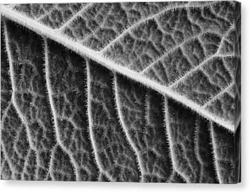Leaf Canvas Print by Chevy Fleet