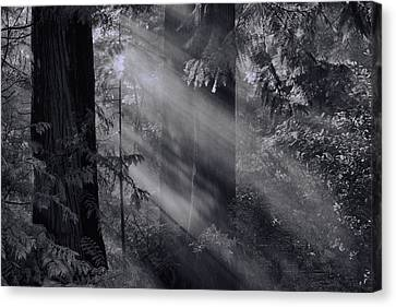 Let There Be Light Canvas Print by Don Schwartz