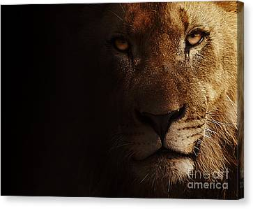 Canvas Print featuring the photograph Lion by Christine Sponchia