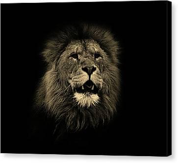 Lions Roar Canvas Print by Martin Newman