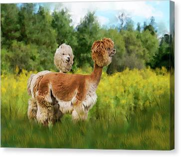2 Little Llamas Canvas Print by Mary Timman