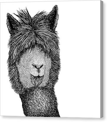 Llama Canvas Print by Karl Addison