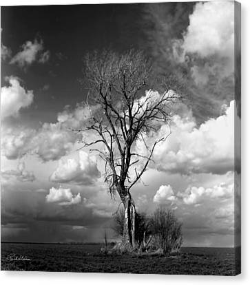Lone Tree Canvas Print by Rich Stedman