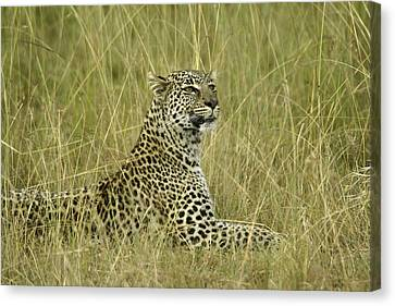Lovely Leopard Canvas Print by Michele Burgess