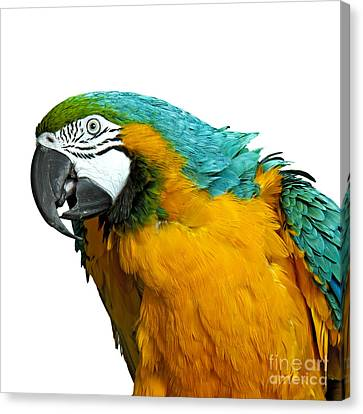 Macaw Bird Canvas Print