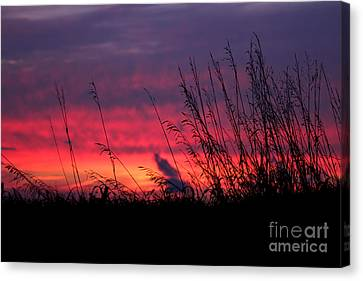 Morning Poetry Canvas Print by Everett Houser