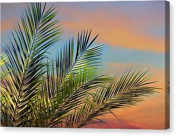 Naples Palms Canvas Print by Lori Deiter