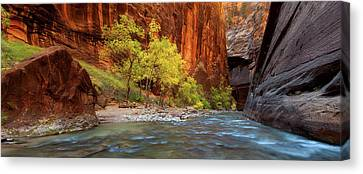 Of Trees And Light Canvas Print by Chris Moore