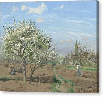 Orchard In Bloom Canvas Print by Camille Pissarro