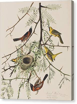 Wild Orchards Canvas Print - Orchard Oriole by John James Audubon