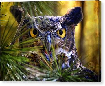 Owl In The Pines Canvas Print