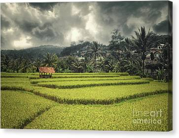 Canvas Print featuring the photograph Paddy Field by Charuhas Images