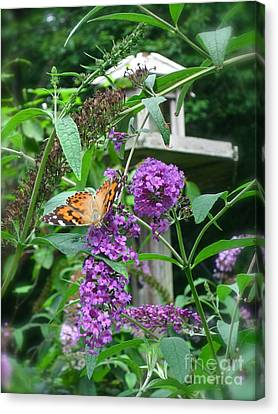 Painted Lady Butterfly Canvas Print by Nancy Patterson